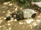 Zoo-Praha--90.jpg