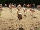Zoo-Praha--94.jpg