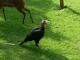 Zoo-Praha-1-98.jpg