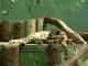 Zoo-Praha2-106.jpg