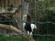 Zoo-Praha3-110.jpg