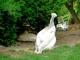 zoo-v-praze-104.jpg