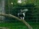 zoo-v-praze-105.jpg